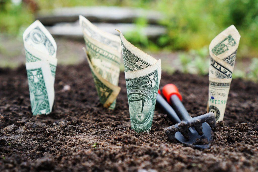 Valoración del capital natural: ¿qué es y por dónde empezamos?
