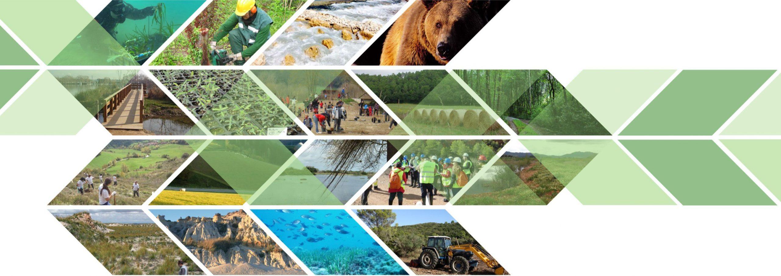 ¿Cómo desarrollar proyectos de restauración ecológica desde la empresa? Aquí tienes La Guía definitiva