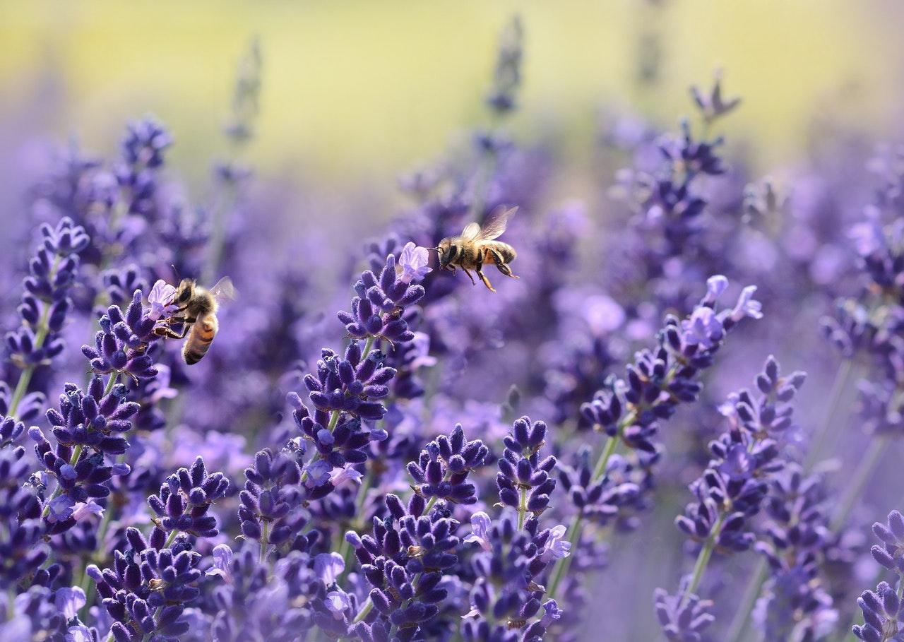 2 claves para transformar tu estrategia de biodiversidad en una de capital natural