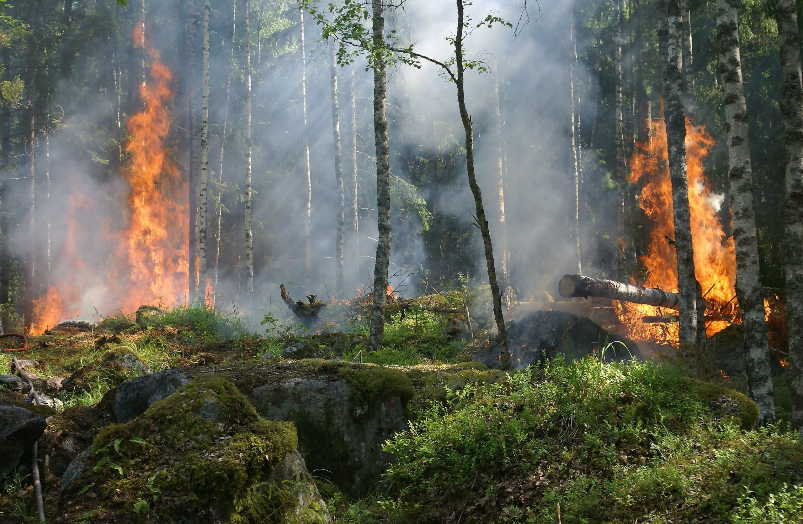 Incendios forestales ¿por dónde empezamos a restaurar?