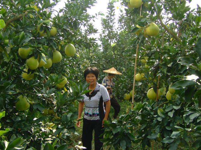 Agricultura sostenible para alimentar a la humanidad