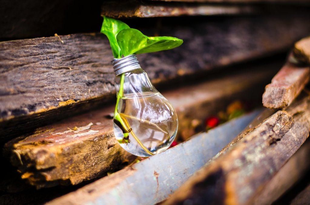 ¿Qué aporta la valoración del capital natural a tu informe integrado de sostenibilidad?