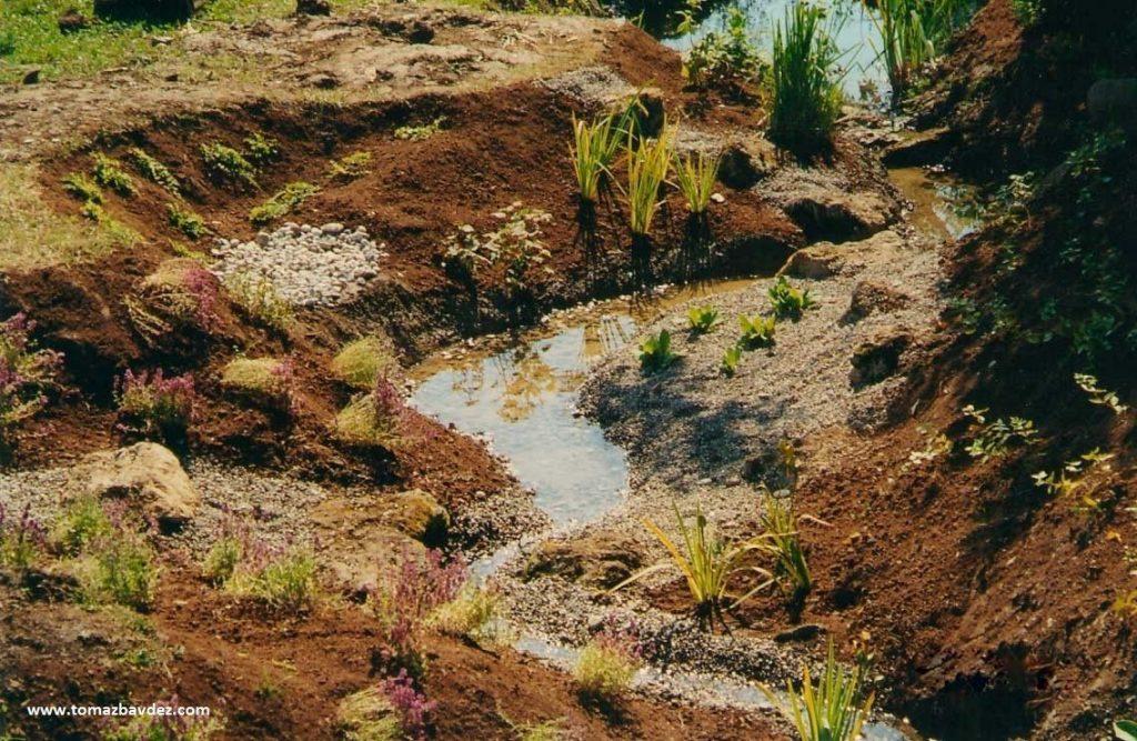 Restauración Ecológica: 5 principios para alargar el final