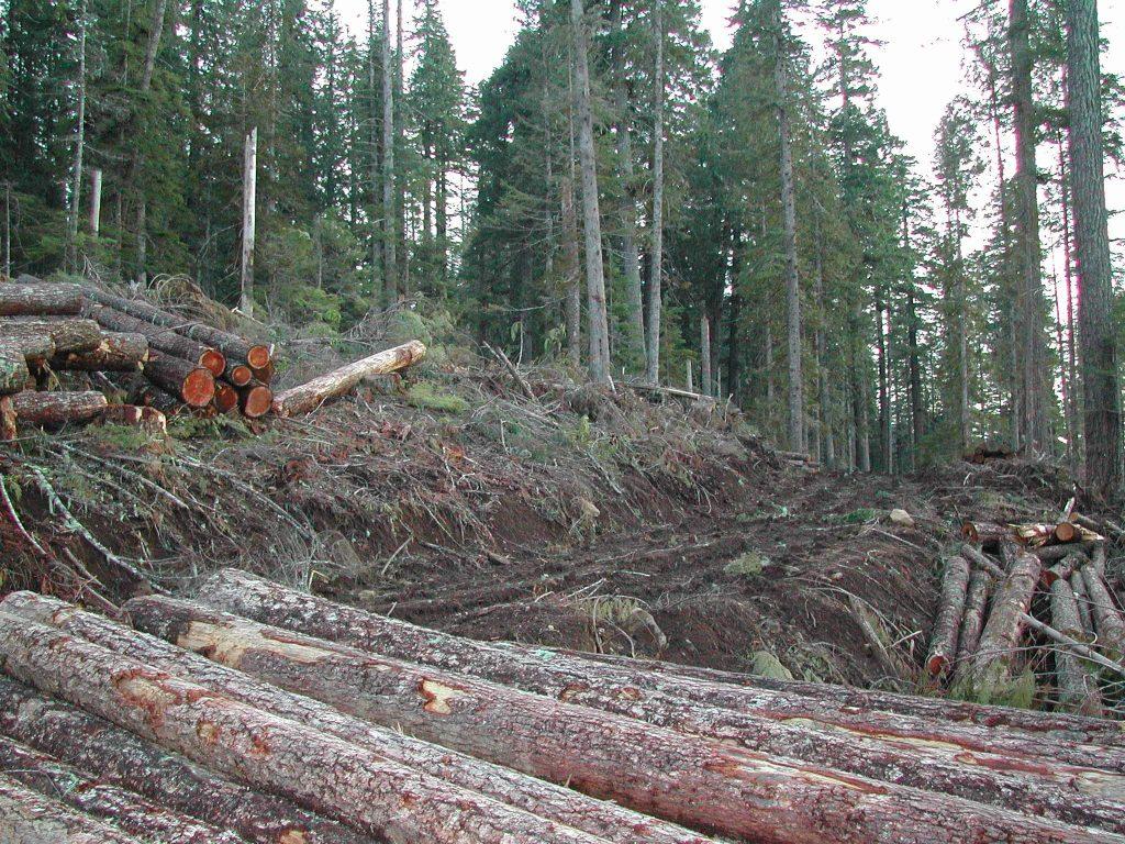 Los árboles más viejos crecen más