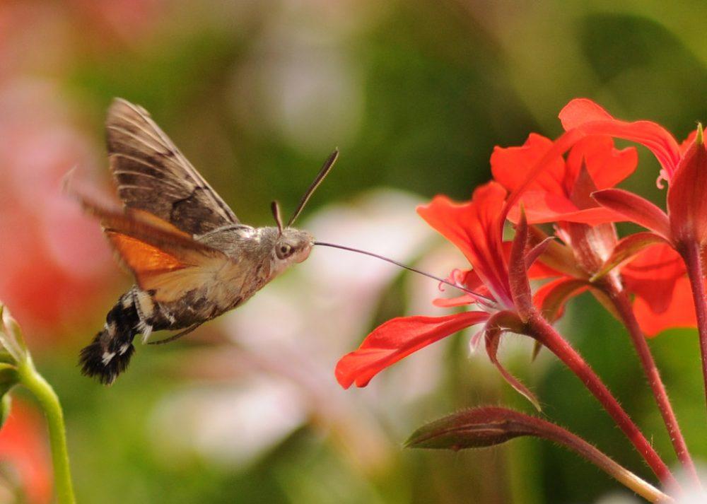 Restauración ecológica periurbana: ¿cuántos ecosistemas caben en un anillo verde?
