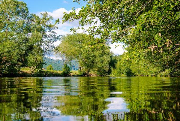 #BIORETURN: Cuantificando la contribución de Endesa al capital natural
