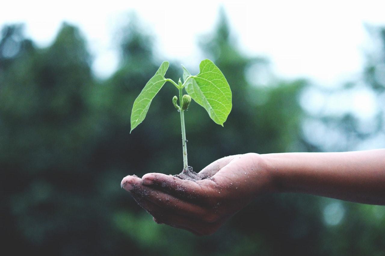¿Cómo impacta tu actividad sobre el capital natural? Aquí tienes un paso a paso para averiguarlo