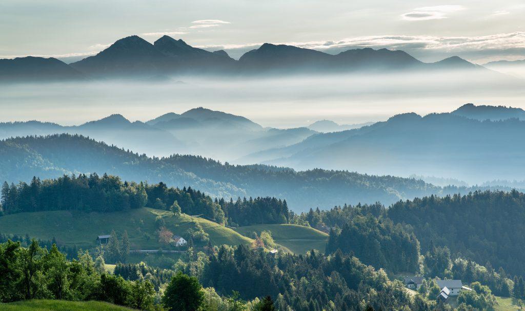 Reforestación vs. Restauración Ecológica: el dilema de la conservación en Europa