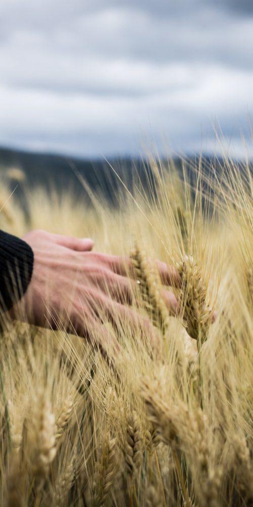 Agroecologia e infraestructura verde para dar de comer a la humanidad
