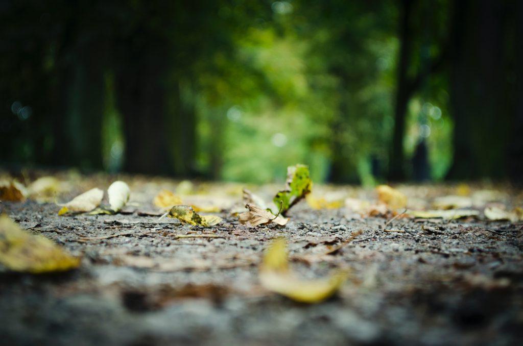 Restauración de suelos para frenar el cambio climático