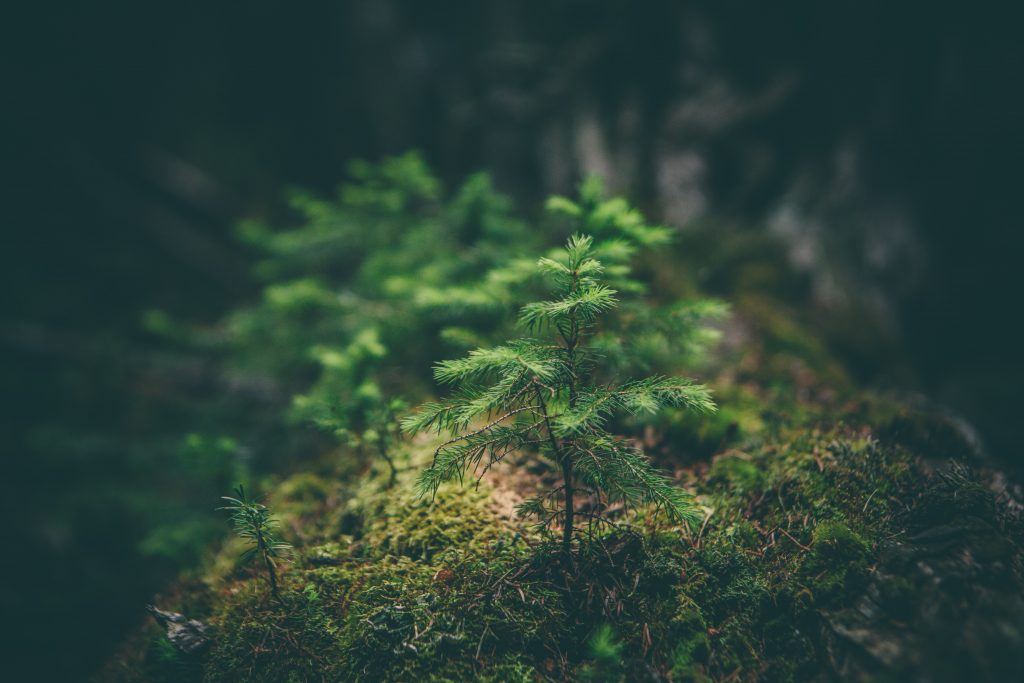 Reforestación en escenarios de cambio climático