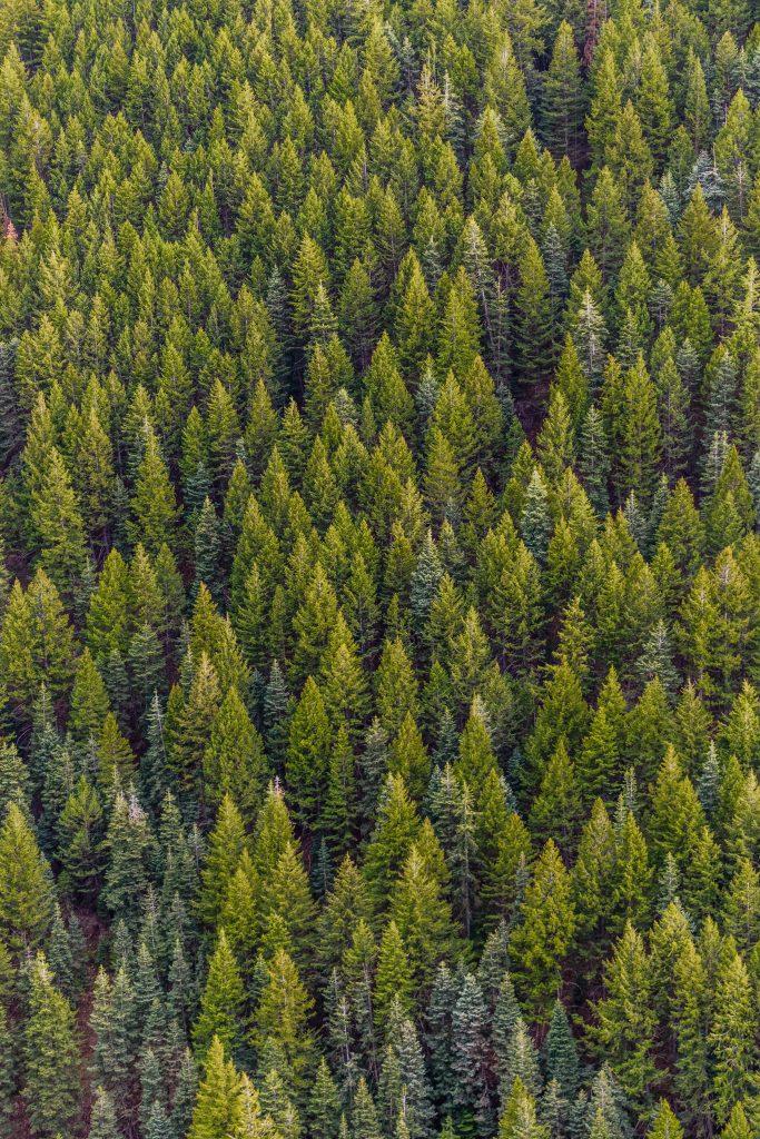 ¿La restauración de mil millones de hectáreas de bosques puede frenar el cambio climático?