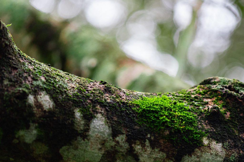 Restauración Ecológica en los ODS sociales