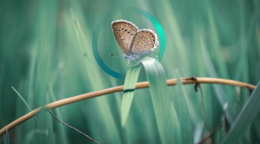 Como (no) restaurar la biodiversidad